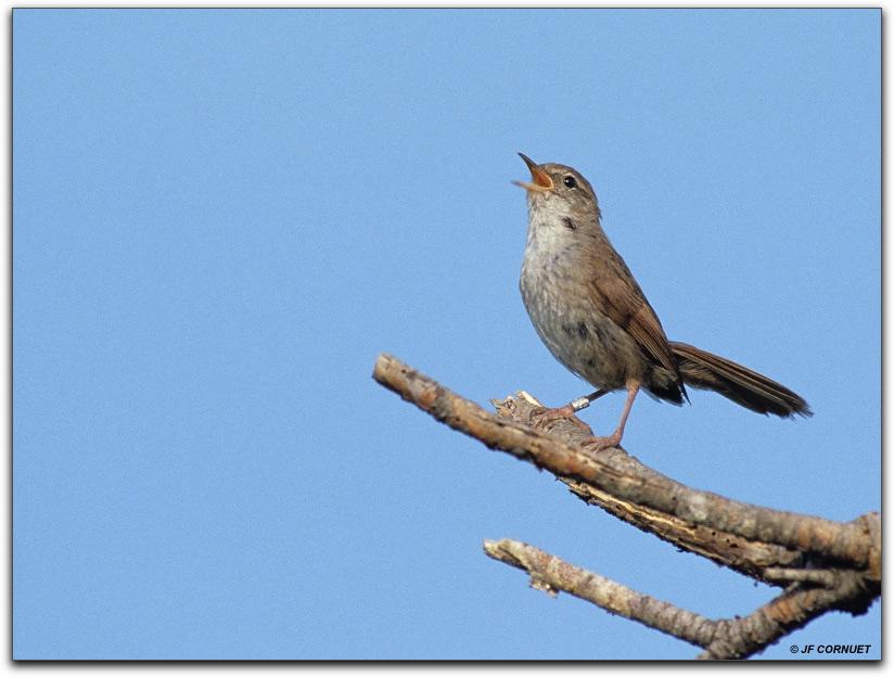 Oiseaux qui chante th 232 me les oiseaux en train de chanter - Dessin oiseau qui chante ...