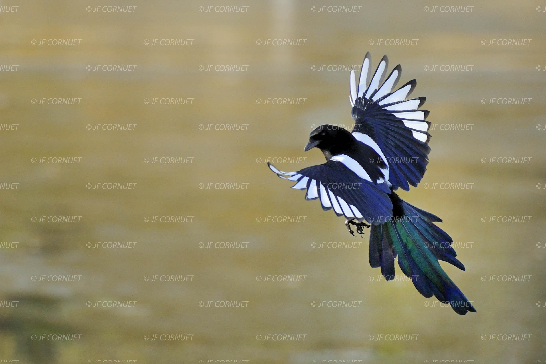 Jeux de oiseaux qui vole - Jeux d oiseau qui vole ...